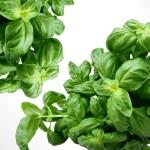 wpid-basil-herbs-green-mediterranean-40720.jpg