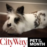 wpid-Dec-Pet-of-the-Month-.jpg