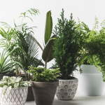 wpid-house-plants.png